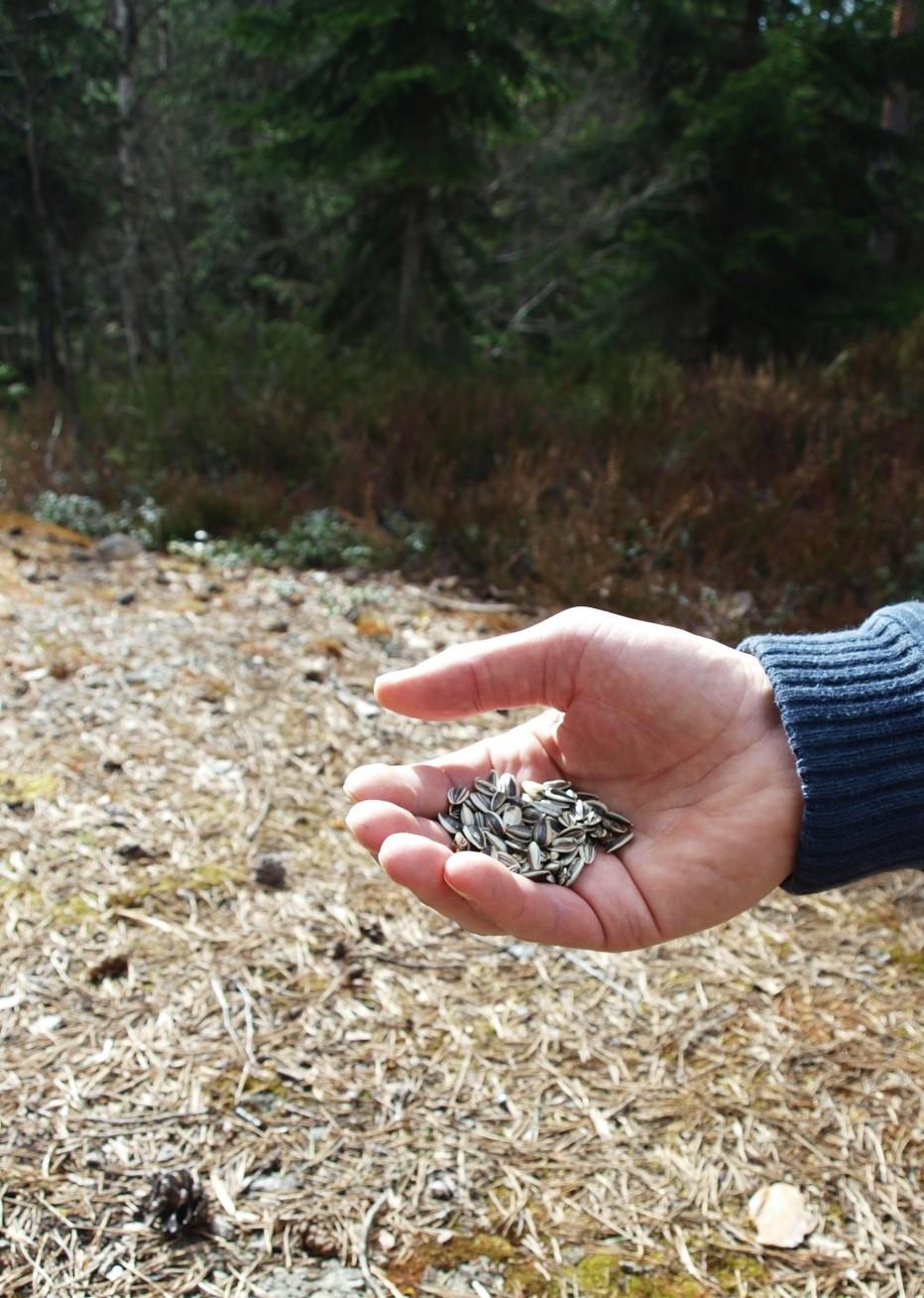 En hånd full av frø