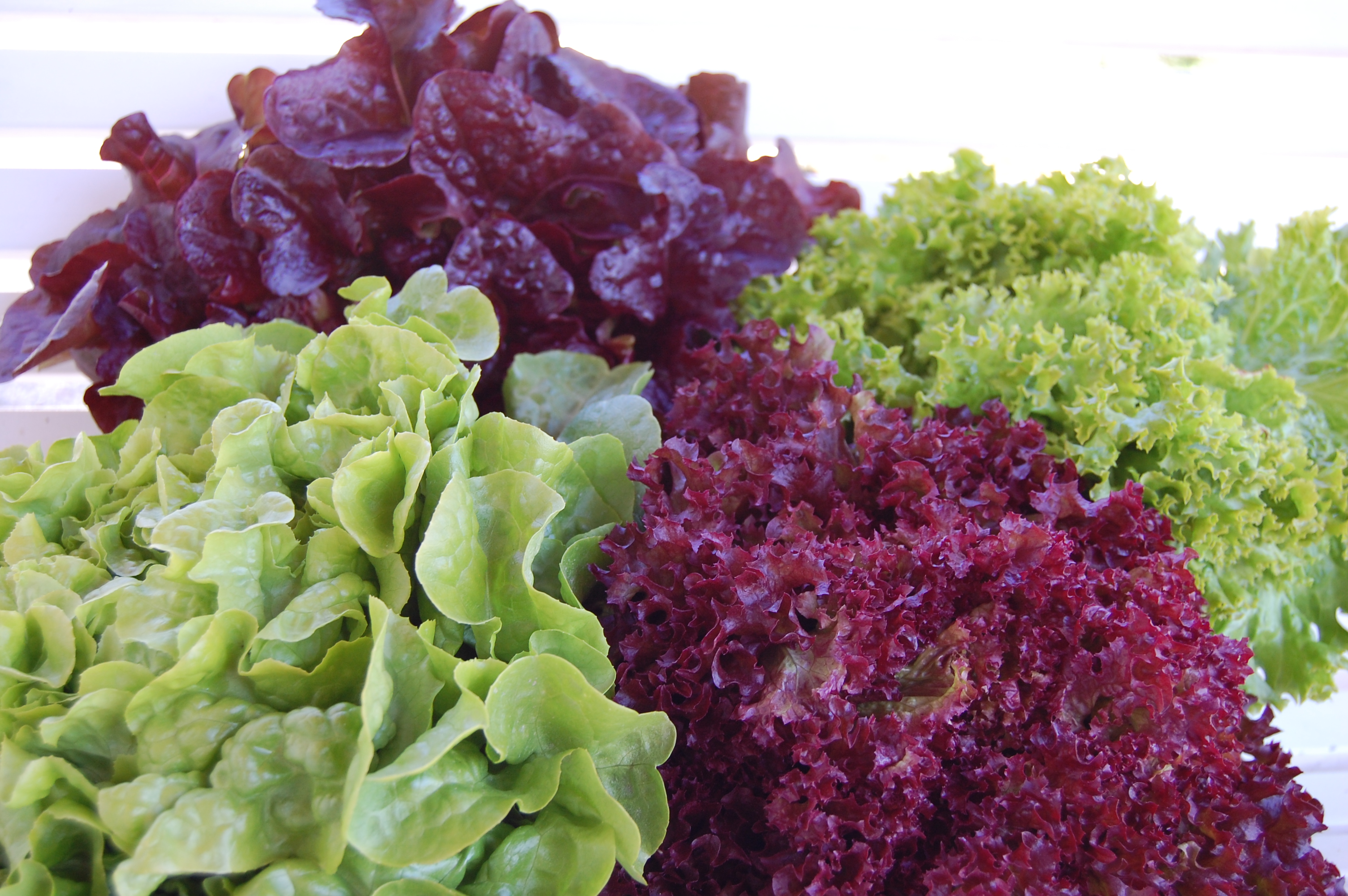 Salater/Salater.jpg
