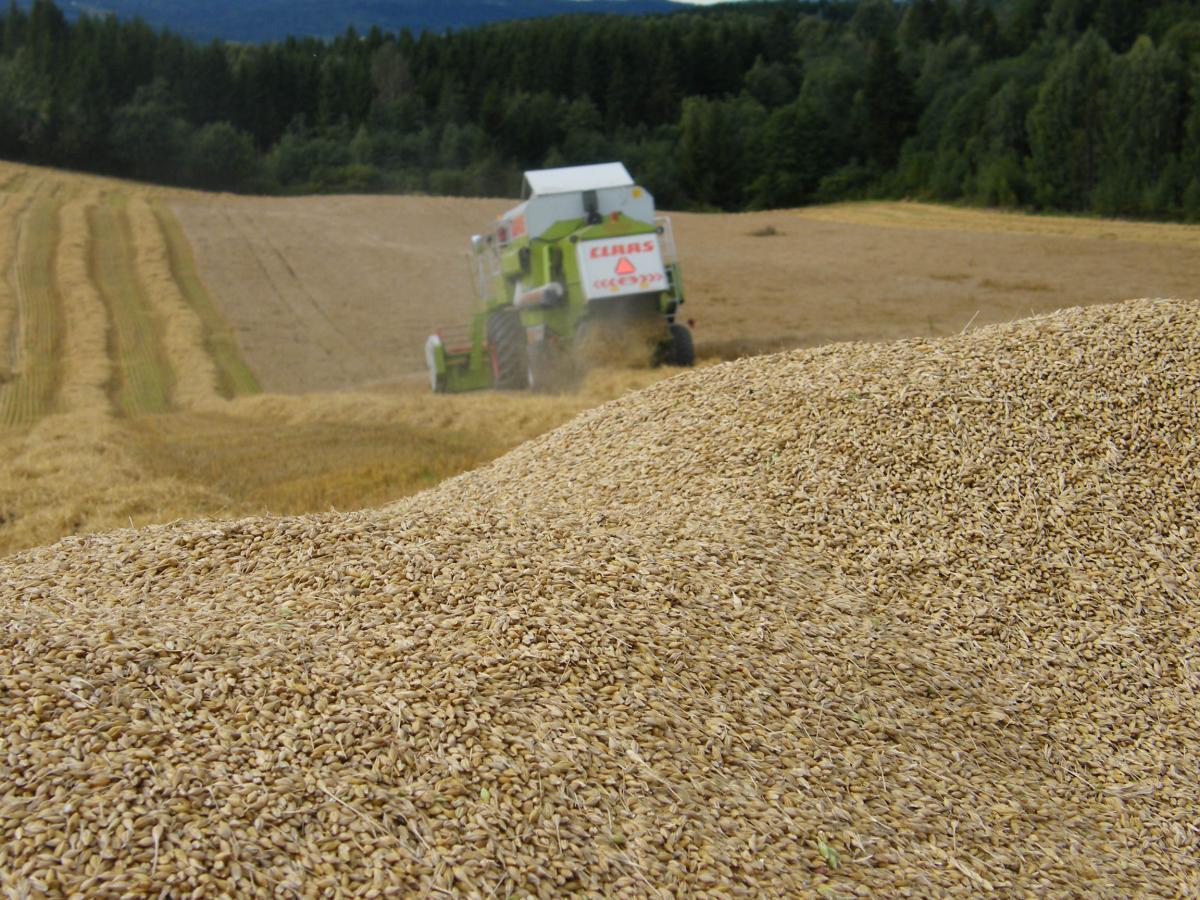 Korn er det jordbruksproduktet som egner seg best til lagring. Norsk korn er viktig for å sikre Norge en størst mulig selvforsyning over år.