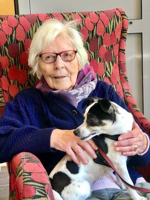 eldre trives med dyr privat omsorg for eldre økt livskvalitet