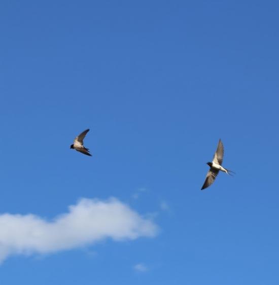To fugler som flyr