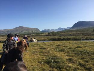 Hest i Grimsadalen, horse
