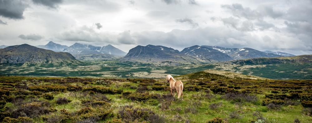 Grimsdalen og hest