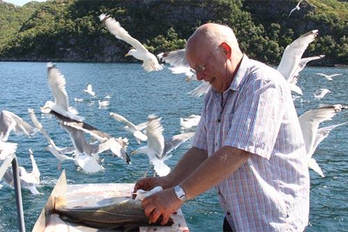 Mann sløyer fisk omringet av måker