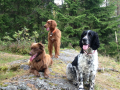 Sandy, Brownie og Vicky
